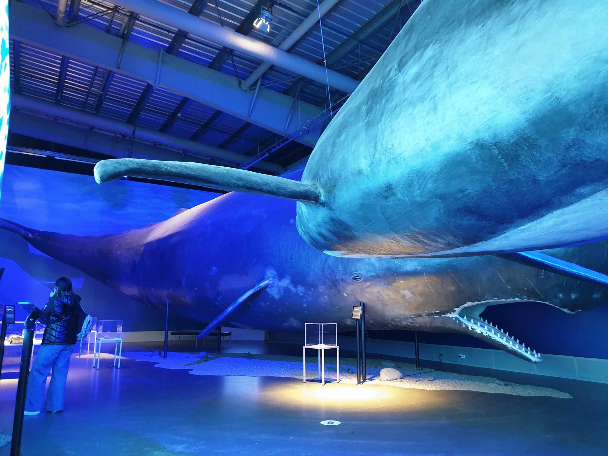 Exhibícia Islandských veľrýb