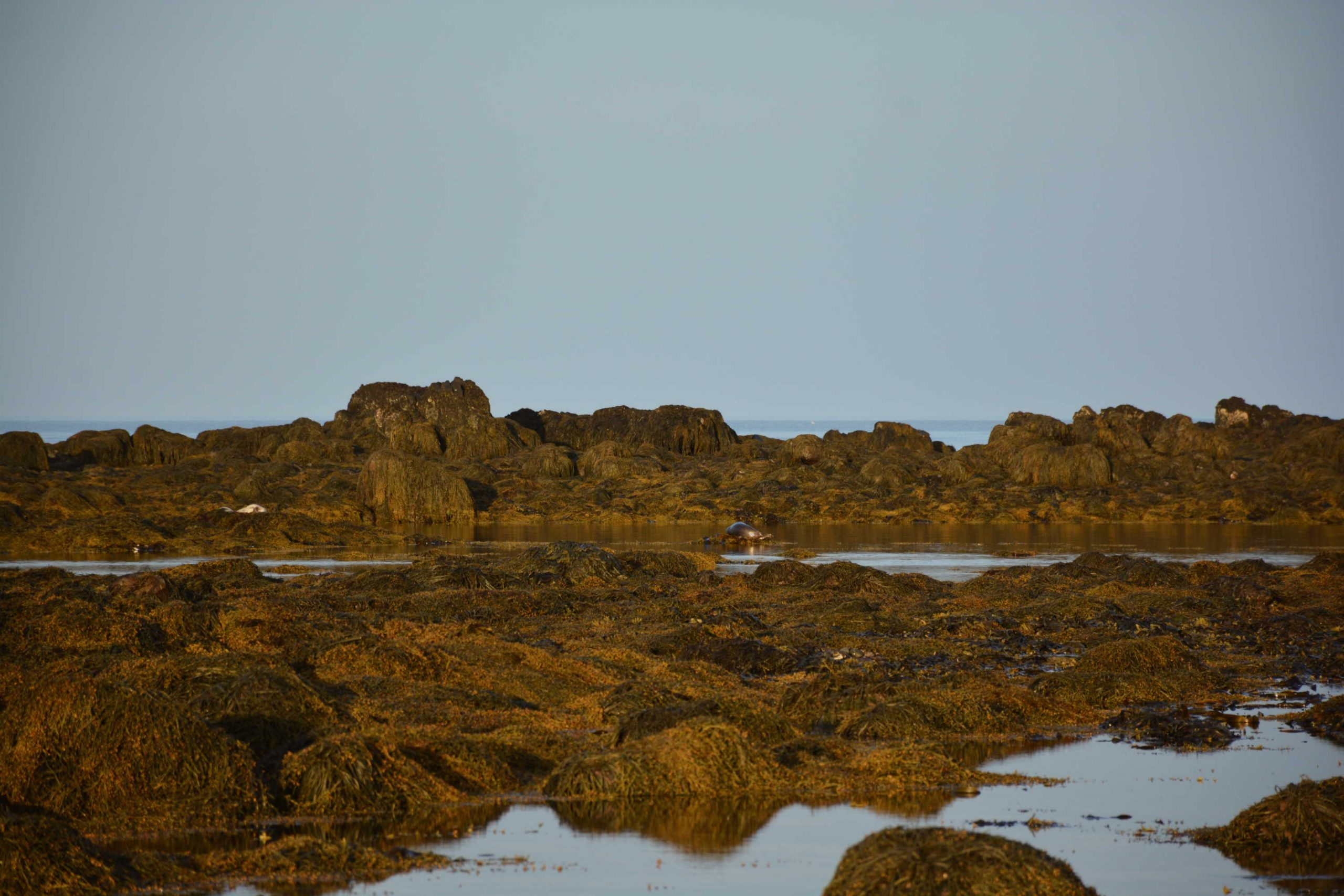 Pláž Ytri Tunga