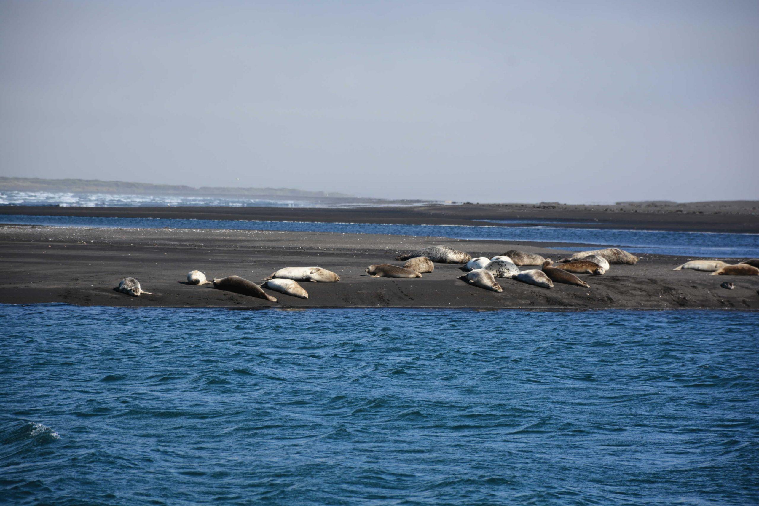 tulene sa vyhrievajú na slnku
