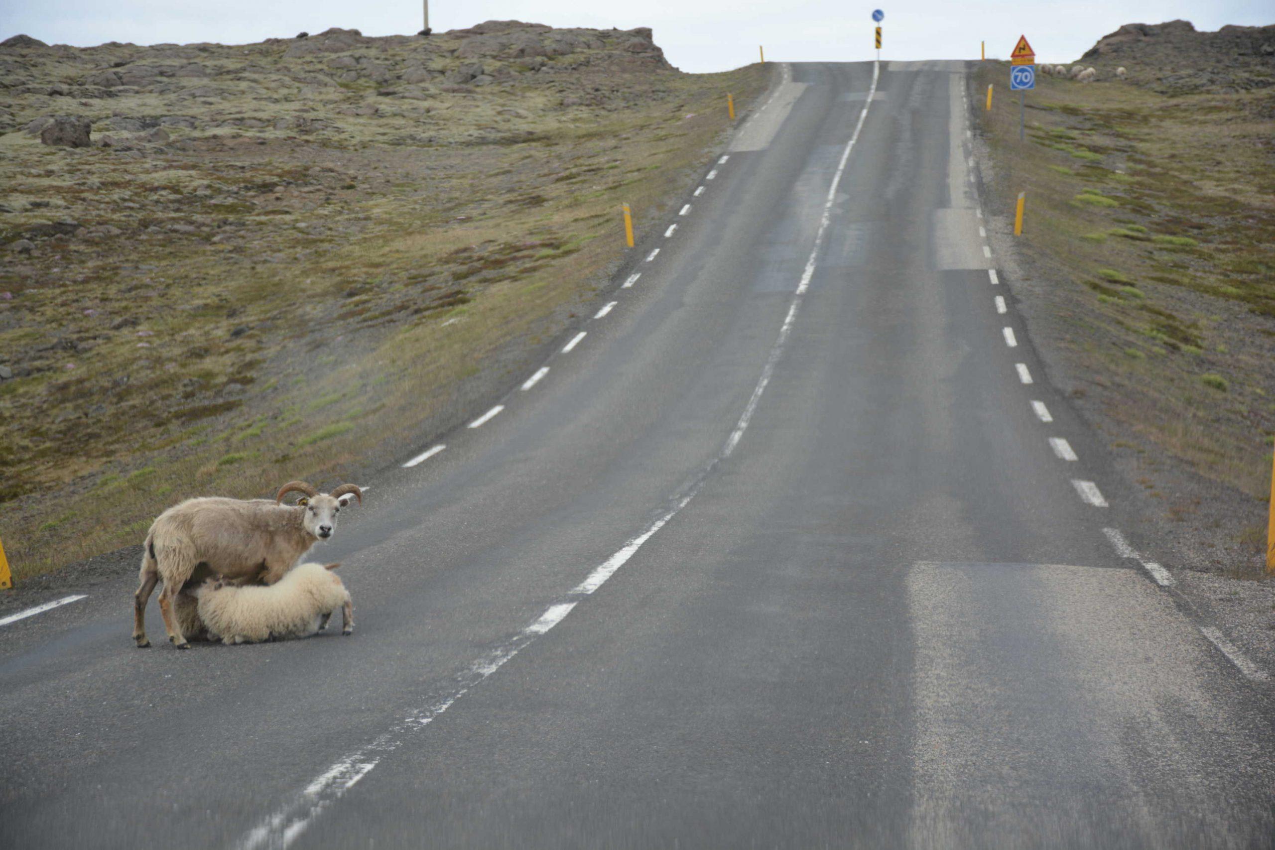islandské reálie